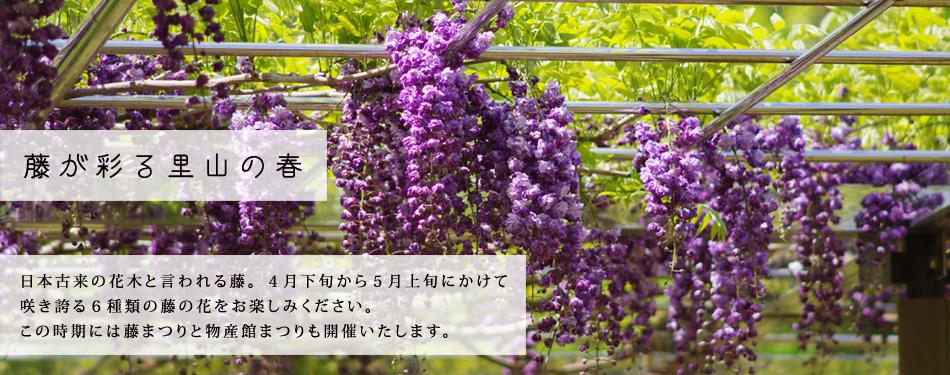 藤が彩る里山の春